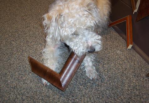 Tilley the dog picks out a frame